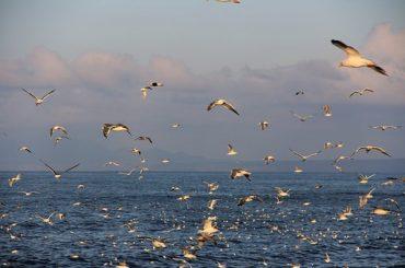 Российские военные моряки открыли 11 новых островов в Мировом океане